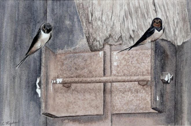 "Swallows by the River Trent, watercolour, 12"" x 8"""